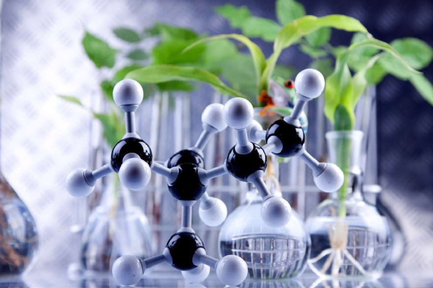 Laboratory experiment with plants